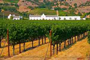 Napa Valley Visitors Guide