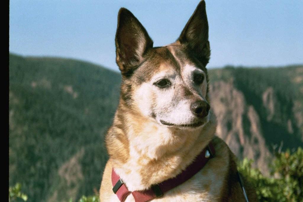 Dog Galyn age 10