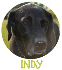 IndyPic