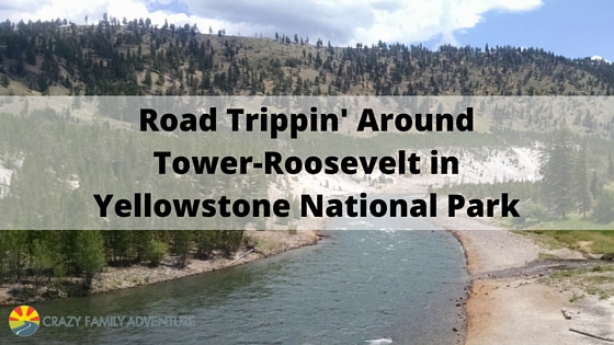 Road Trippin'Around Tower Roosevelt In Yellowstone