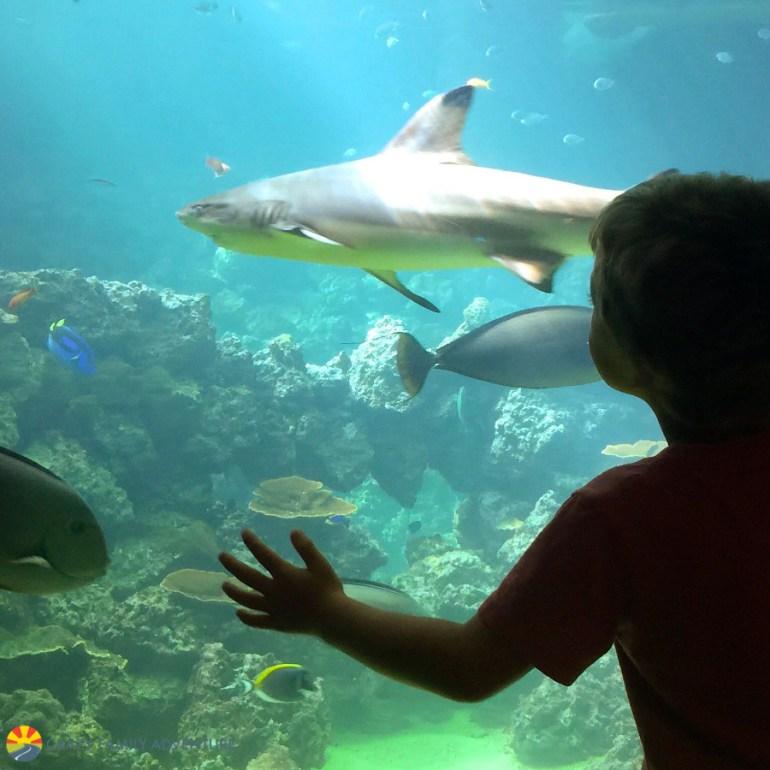 gulfarium-shark