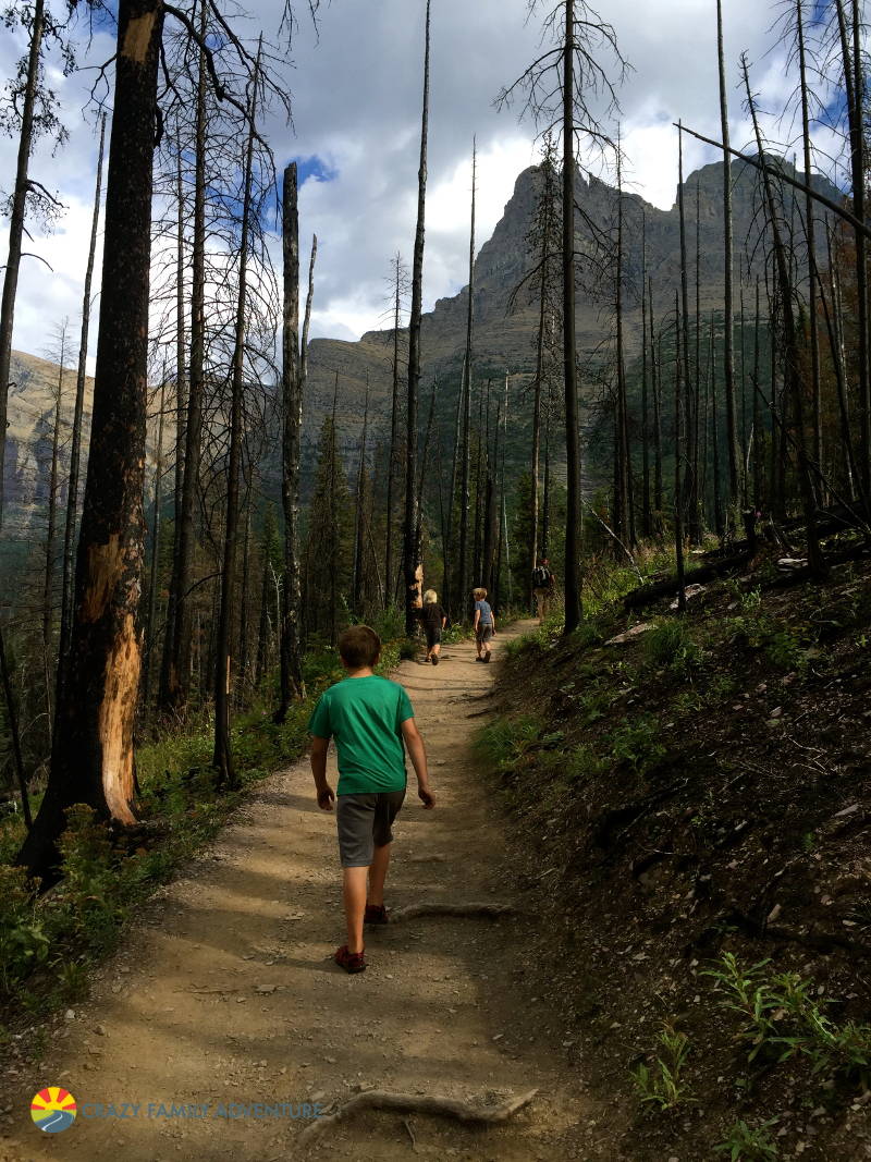 The trail to Virginia Falls in Glacier National Park