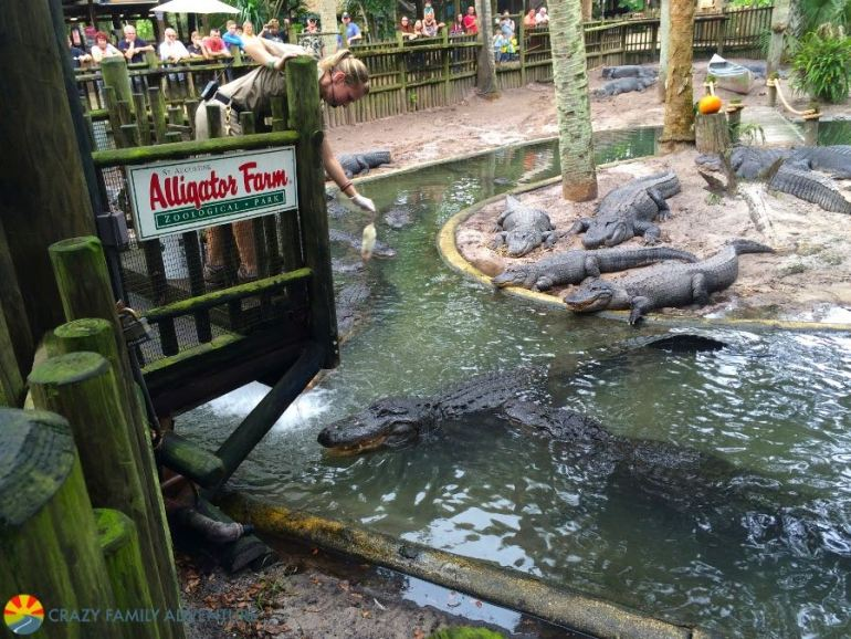 Feed the gators in St. Augustine on The Ultimate Florida Road Trip