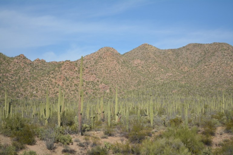 For things to do in Tucson with kids check out Saguaro National Park