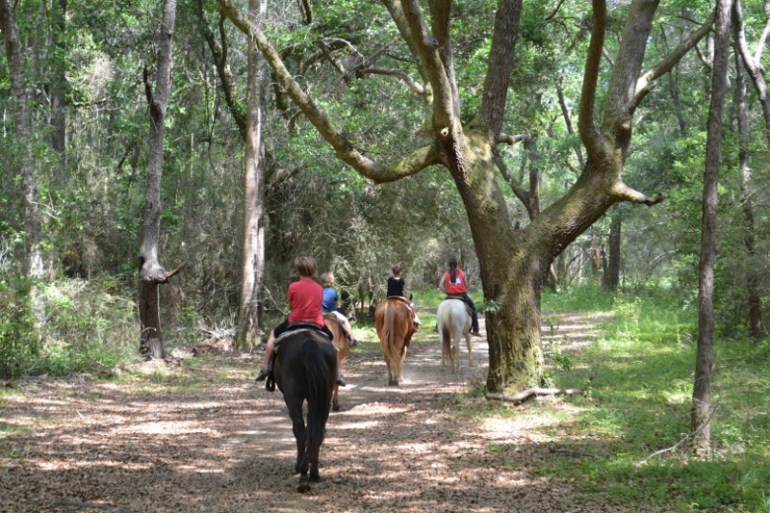 Another fantastic Gulf Shores attraction is horseback riding at Oak Hollow Farms.