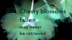 cherryblossomquote