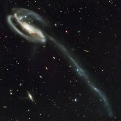 """Galaktyka Kijanka (UGC 10214) to galaktyka spiralna z poprzeczką znajdująca się w konstelacji Smoka w odległości 420 milionów lat świetlnych od Ziemi. Jedno z ramion galaktyki jest rozciągnięte na odległość 280 tys. lat świetlnych. Przyczyną tego jest sąsiednia galaktyka (widoczna za lewą górną częścią dysku Kijanki), która oddziałuje grawitacyjnie na gwiazdy, gaz i pył. Za miliony lat z tego """"ogona"""" powstaną karłowate galaktyki będące satelitami dużej galaktyki spiralnej. Fot. NASA, H. Ford (JHU), G. Illingworth (UCSC/LO), M.Clampin (STScI), G. Hartig (STScI), the ACS Science Team oraz ESA"""