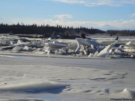 Alaska. Fot. Krzysztof Zawierucha