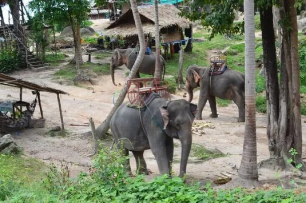 Image result for 9 Fantastic things to do in Koh Phangan, Thailand