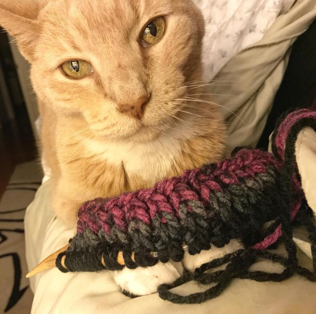 Bob and knitting. This is hygge as hell.