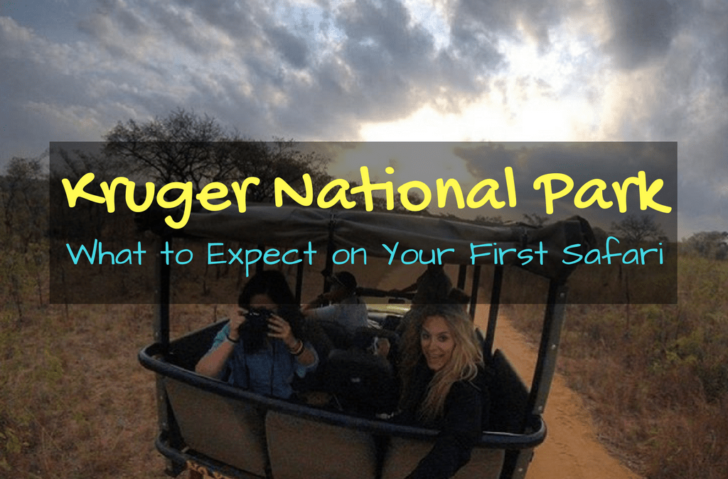 What to Expect on Your First Safari in Kruger National Park