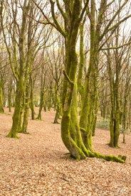Forêts 12