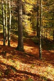 Forêts 16