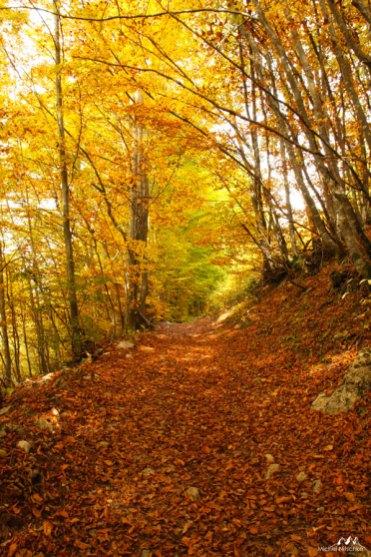 Forêts 18