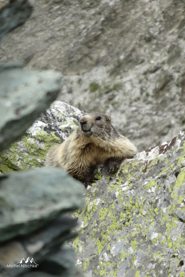 Marmottes 1