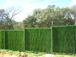 seto_verde 1