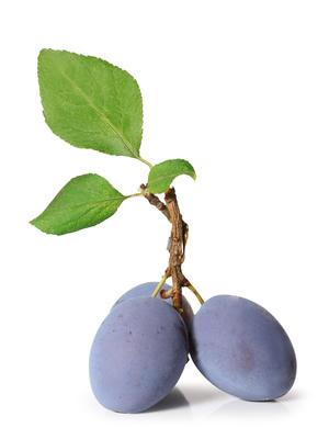 Prune, Pruneau (Prunus domestica) | Creapharma