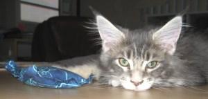 Bored Kitty