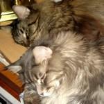 Dream Kitties