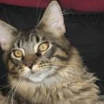 My Sweet Kitty - Legend