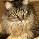 Legend - Cupboard Kitty