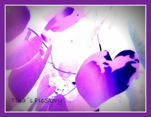 Tinas Pic Story - Purple Leaves