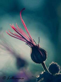 Photography by Lilliana