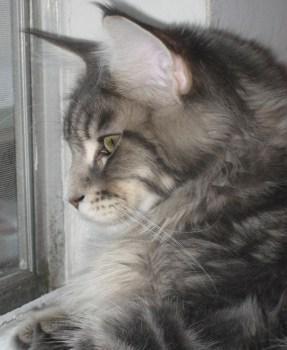 Tsunami - Watch Cat