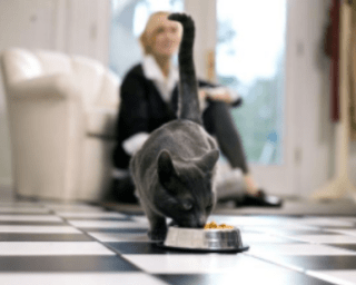 Cat At Mealtime