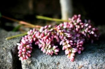Renee Flower 2