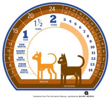 Cat Age Chart - Compressed