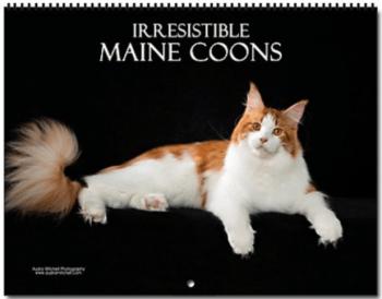 Maine Coon Calendar