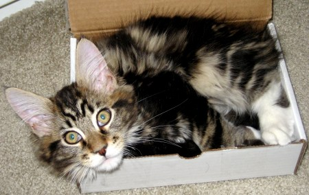 Magellan at Create With Joy - Kitten In a Box