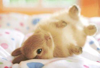 Iggy The Bold Bunny
