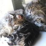 Tsunami & Magellan - Feline Dreams