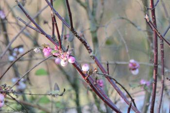 MarieRebelle - Spring