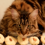 Magellan - Cookies - Thumbnail