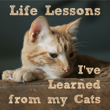 5 Lessons I Learned From My Cat
