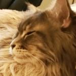 Cozy Cats - Thumbnail