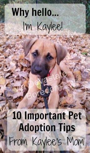 Adopt A Dog Tips