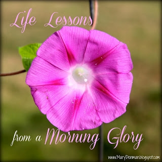 Life Lessons from Morning Glory