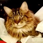 Magellan - Christmas Kitty Thumbnail