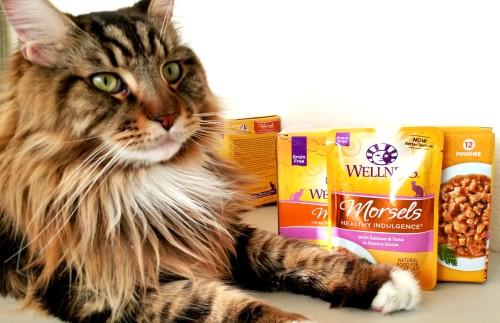 Magellan Loves Wellness Morsels!