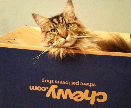 Magellan, My Naughty Cat