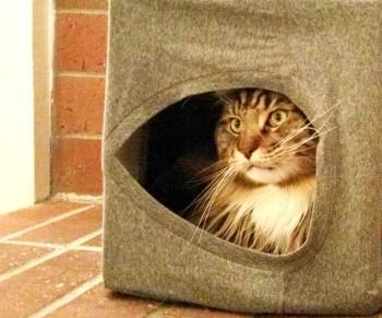 Magellan-In-His-Cat-Cave