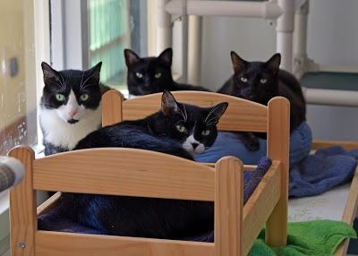 Animal Shelter Buddies