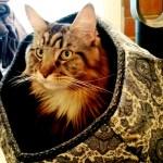 Magellan Sitting In Cat Ball