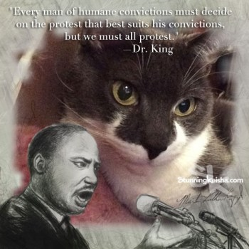A Dream For Anipals