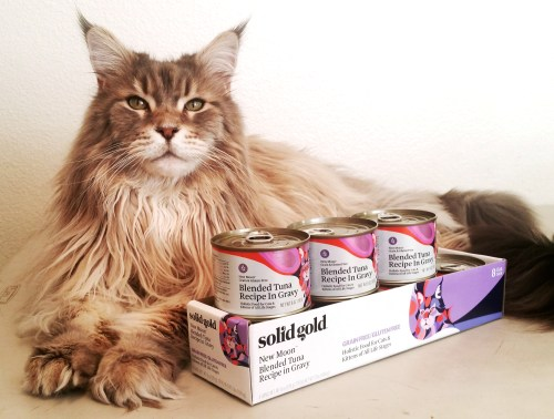 http://www.create-with-joy.com/2018/06/wordless-wednesday-five-oceans-canned-cat-food-is-solid-gold.html