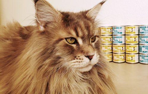 Tsunami-Create-With-Joy.com-Weruva-Cats-In-The-Kitchen